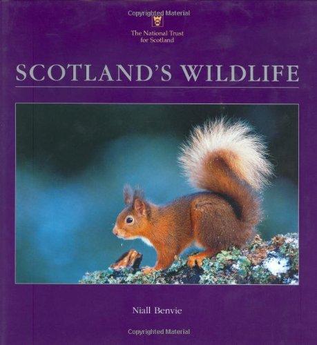Scotland's Wildlife: Niall Benvie