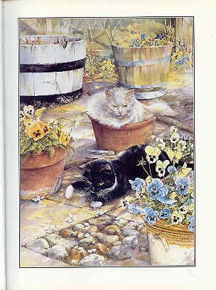The Cat Who Came to Stay: Fotherby, Lesley