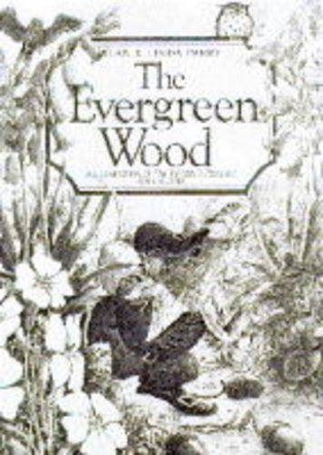 9781856081450: The Evergreen Wood