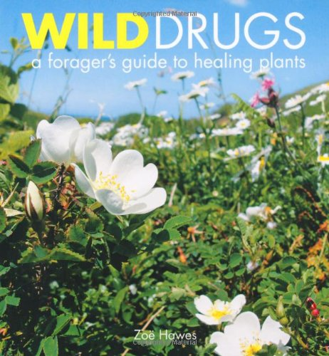 9781856753104: Wild Drugs: A forager's guide to healing plants