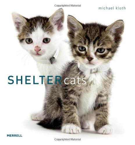 9781858945231: Shelter Cats