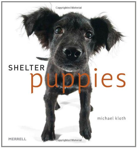 9781858945606: Shelter Puppies