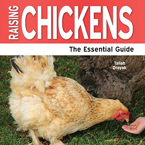 Raising Chickens - The Essential Guide: Drayak, Taliah