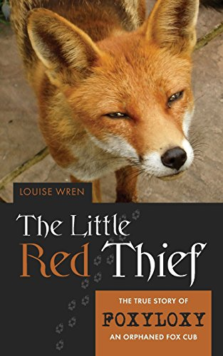 9781861511812: Little Red Thief: The true story of Foxyloxy an orphaned Fox cub