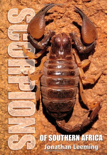 9781868728046: Scorpions of Southern Africa