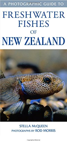 A Photographic Guide to Freshwater Fishes of New Zealand (Paperback): Stella McQueen