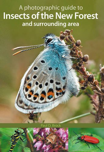 9781874357469: A Photographic Guide to Insects of the New Forest and Surrounding Area