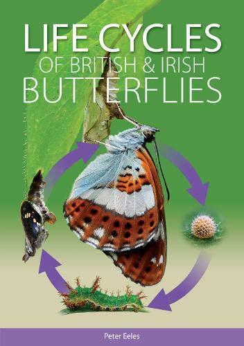 9781874357889: Life Cycles of British and Irish Butterflies
