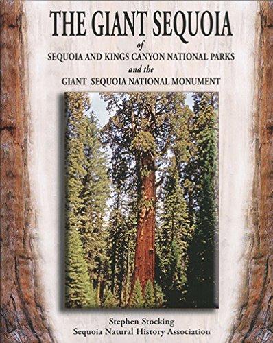 The Giant Sequoia of Sequoia and Kings: Sthephen Stocking