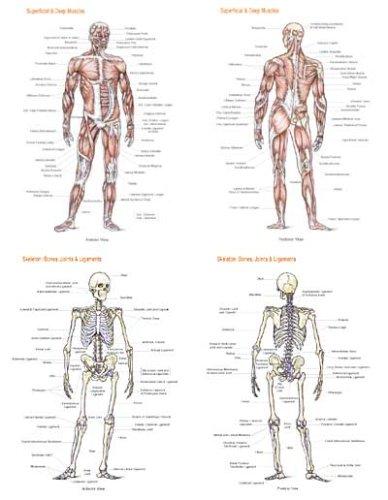 9781878576453: Anatomy Poster