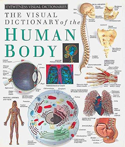 Eyewitness Visual Dictionaries: The Visual Dictionary of: DK