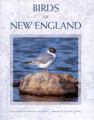 9781885435989: Birds of New England