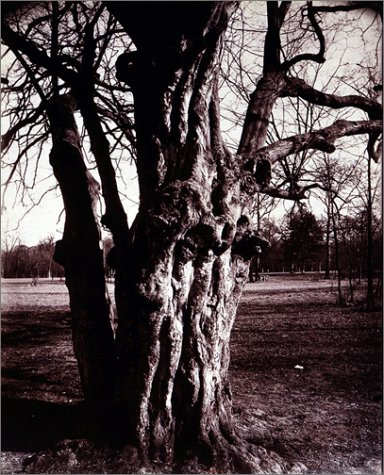 9781891024672: Eugène Atget's Trees: Newly Discovered Photographs from the Bibliothèque Nationale de France