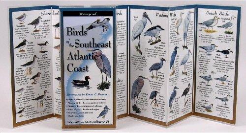 9781893770379: Birds of the Southeast Atlantic Coast (Foldingguides)