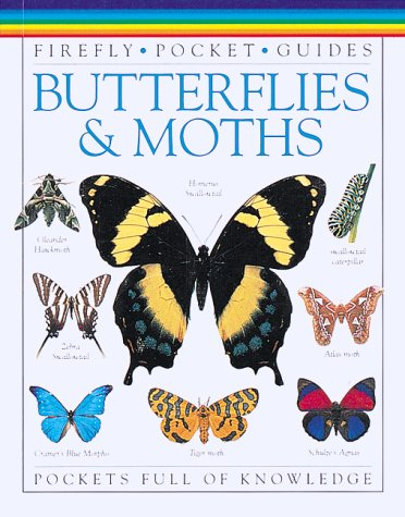 9781895565911: Butterflies & Moths