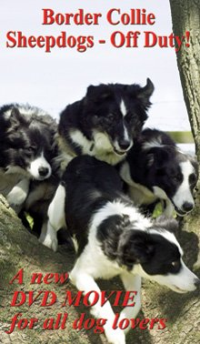 9781897136737: Border Collie Sheepdogs - Off Duty!
