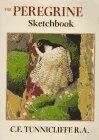 9781900318020: The peregrine sketchbook