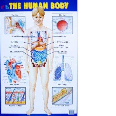 9781900465069: The Human Body Wallchart