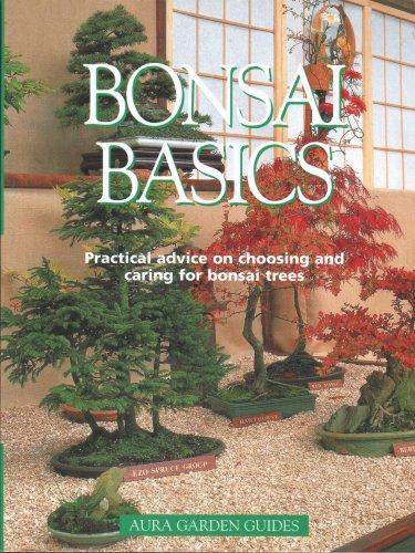 9781901683042: BONSAI BASICS