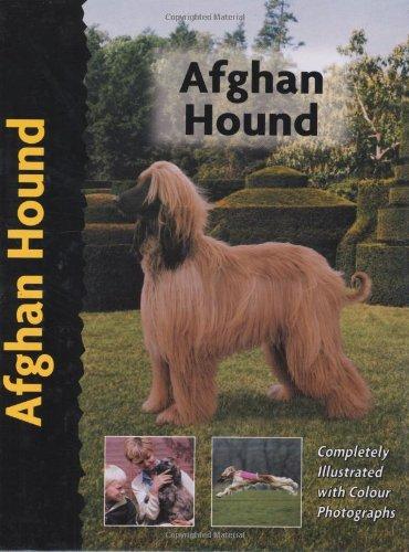 9781902389080: Afghan Hound (Pet love)