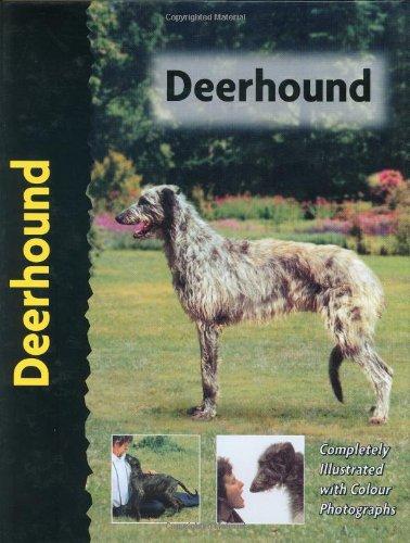 9781903098820: Deerhound