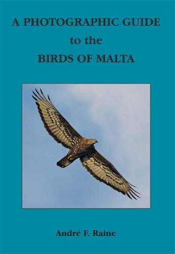 Photographic Guide to the Birds of Malta: Raine, Andre