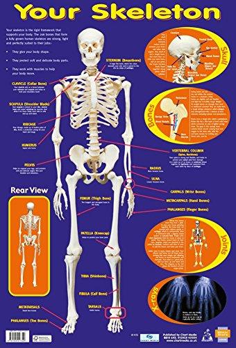 9781904217329: Your Skeleton