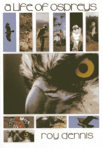 Life of Ospreys: Dennis, Roy