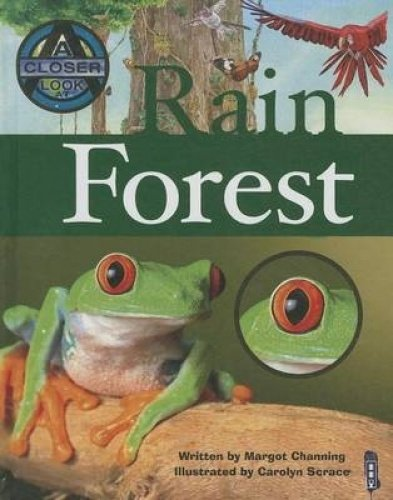 9781904642718: Rain Forest (Closer Look At...)