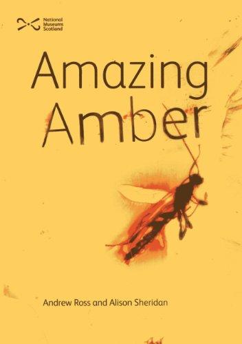 9781905267798: Amazing Amber