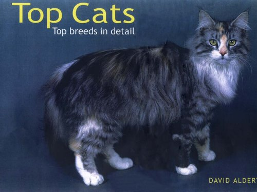 9781905573370: Top Cats: Top Breeds in Detail (Panoramic): Top Breeds in Detail (Panoramic)