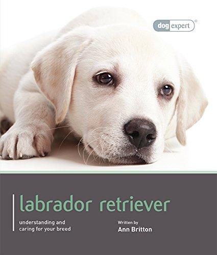 9781906305581: Labrador Retriever (Dog Expert)
