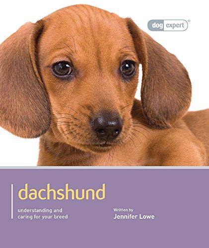 Dachshund (Dog Expert): Lowe, Jennifer