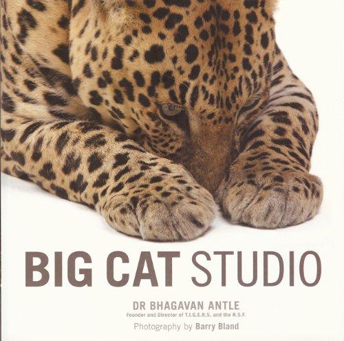9781906672669: Big Cat Studio