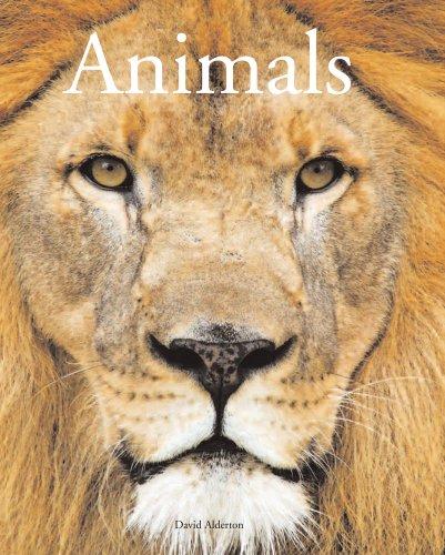 9781906842017: Encyclopedia of Animals