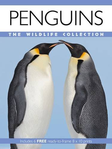 9781906969844: Penguins (Wildlife Collection)
