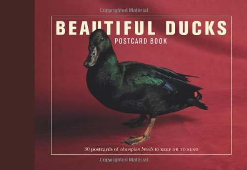 9781907332548: Beautiful Ducks Postcard Book: 30 Postcards of Champion Breeds to Keep or Send