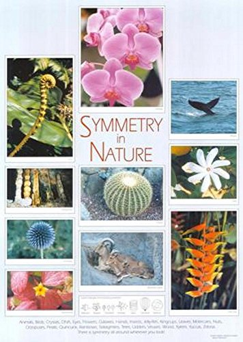 9781907550683: Symmetry in Nature Poster
