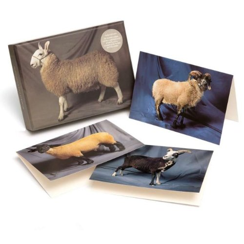 9781908005021: Beautiful Sheep Notecard set