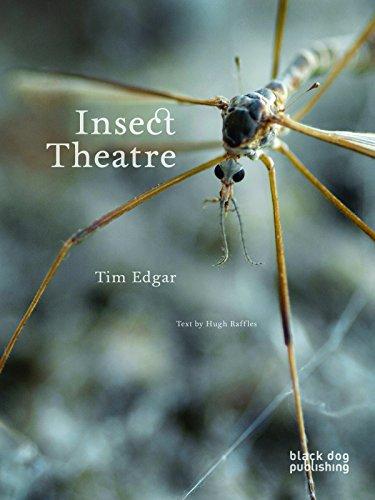 Insect Theatre: Raffles, Hugh, Edgar, Tim