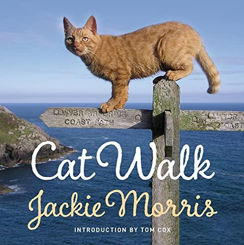 9781909823273: Cat Walk
