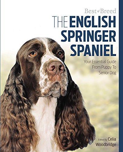 English Springer Spaniel Best of Breed: Woodbridge, Celia