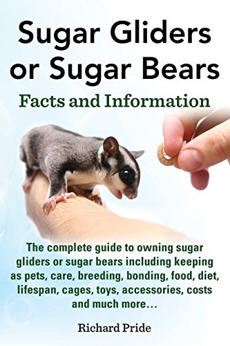 Sugar Gliders or Sugar Bears:
