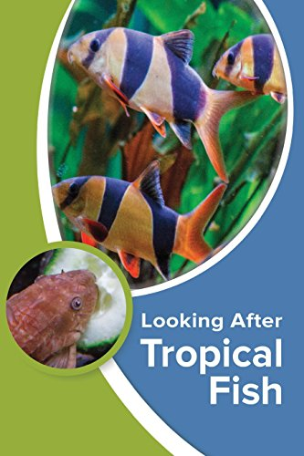 9781911174042: Looking After Tropical Fish