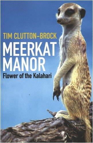 9781920289010: Meerkat Manor: Flower of the Kalahari