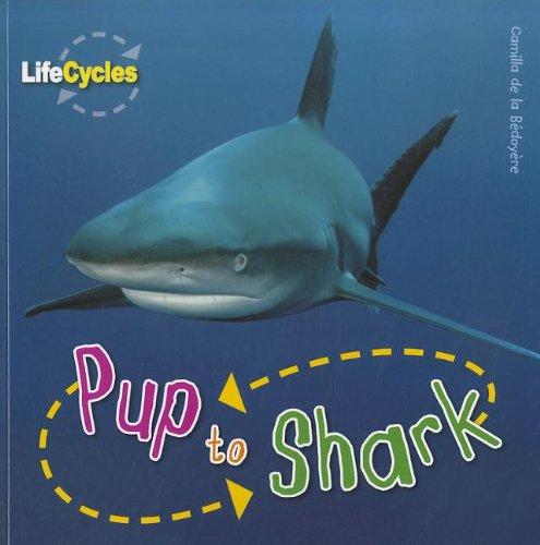 Pup to Shark (Life Cycles): Bedoyere, Camilla De