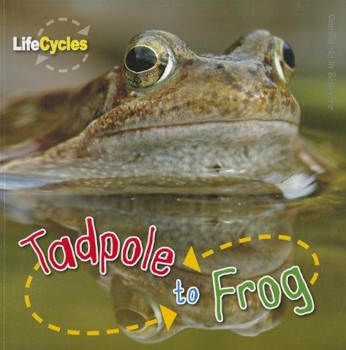 9781926853413: Tadpole to Frog (Life Cycles (QEB Publishing))