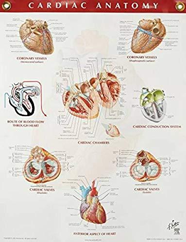 Cardiac Anatomy Chart, 1e (Netter Charts): Netter MD, Frank H.