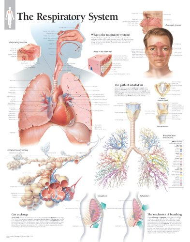 Respiratory System: Scientific Publishing Company