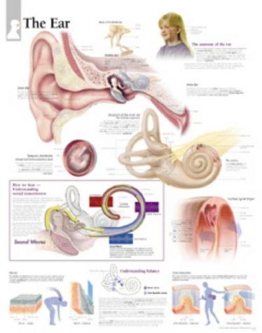 9781930633575: The Ear chart: Laminated Wall Chart